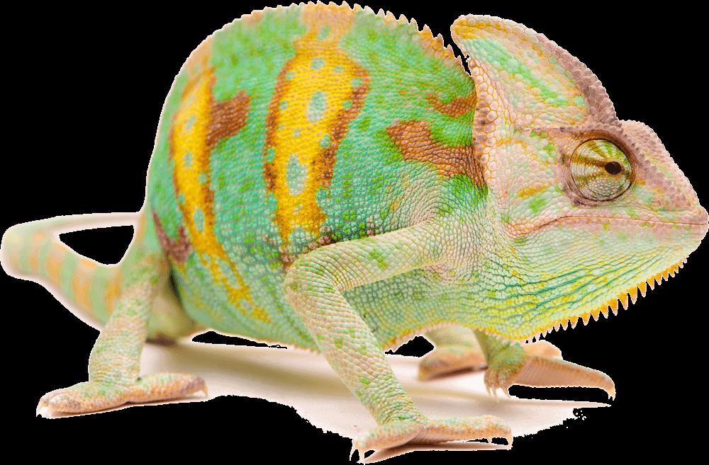 Chameleon passt sich responsive der Umgebung an.